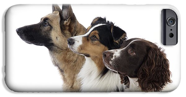 Dog Close-up iPhone Cases - Shepherds With Springer Spaniel iPhone Case by John Daniels