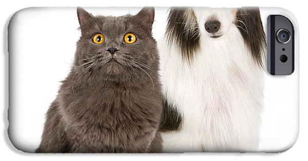 Black Dog iPhone Cases - Shetland Sheepdog and Gray Cat iPhone Case by Susan  Schmitz