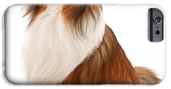 Sheltie iPhone Cases - Shetland Sheepdog Isolated on White iPhone Case by Susan  Schmitz