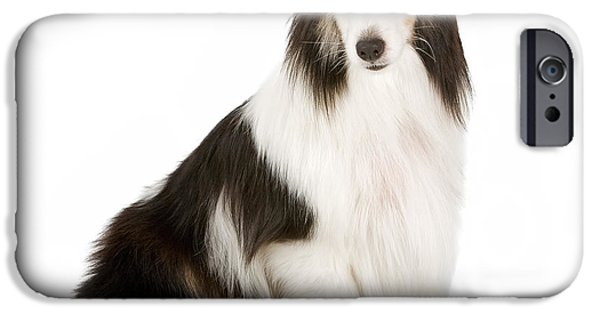 Black Dog iPhone Cases - Shetland Sheepdog With Blue Eyes Stock Photo  iPhone Case by Susan  Schmitz