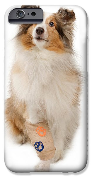 Sheltie iPhone Cases - Shetland Sheepdog With Injured Leg iPhone Case by Susan  Schmitz