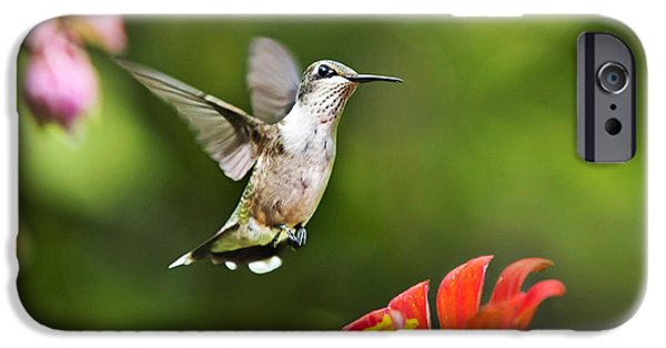 Archilochus Colubris iPhone Cases - Shimmering Breeze Hummingbird iPhone Case by Christina Rollo