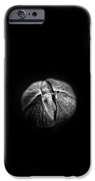 Bud iPhone Cases - Shine Through iPhone Case by Shane Holsclaw