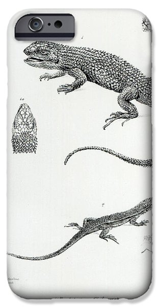 Iguana iPhone Cases - Shingled Iguana iPhone Case by English School