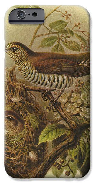 Shine iPhone Cases - Shining Cuckoo iPhone Case by J G Keulemans