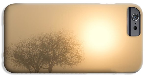 Fruit Tree iPhone Cases - Shining Through iPhone Case by Mike  Dawson