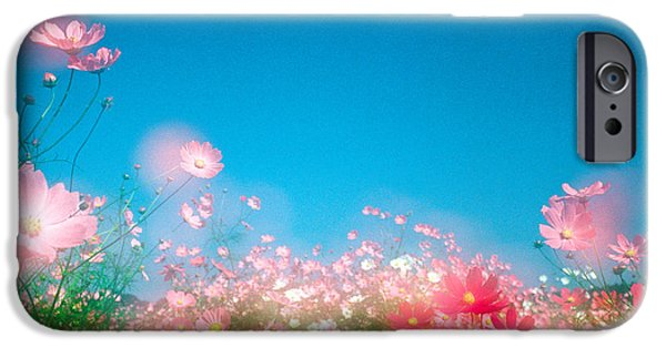Close Focus Nature Scene iPhone Cases - Shiny Pink Flowers In Bloom With Blue iPhone Case by Panoramic Images