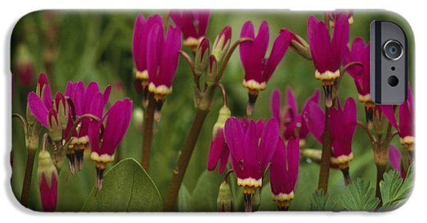 Tongass iPhone Cases - Shooting Star Wildflowers On Prince Of iPhone Case by Nicholas Fucci