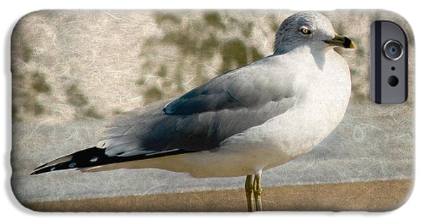 Seagull Mixed Media iPhone Cases - Shore Bird iPhone Case by Trish Tritz