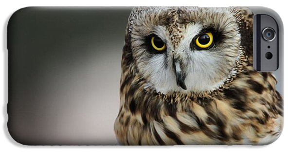 Owl iPhone Cases - Short Eared Owl Portrait iPhone Case by Dan Sproul
