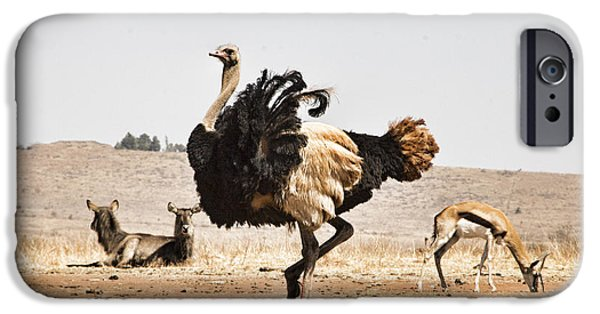 Ostrich iPhone Cases - Show-Off V3 iPhone Case by Douglas Barnard