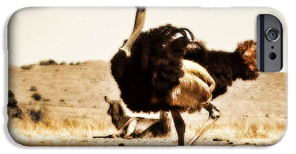 Ostrich iPhone Cases - Show-Off V4 iPhone Case by Douglas Barnard