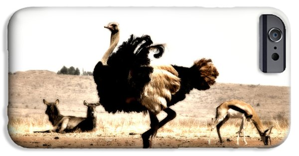 Ostrich iPhone Cases - Show-Off V5 iPhone Case by Douglas Barnard