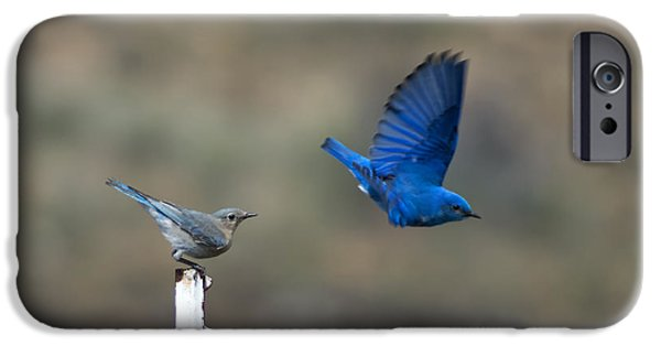 Bluebird iPhone Cases - Showing Off iPhone Case by Mike  Dawson