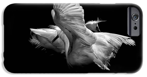Snowy Pyrography iPhone Cases - Showy Snowy Egrets iPhone Case by Richard Matheny