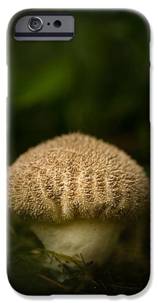 Mushrooms iPhone Cases - Shroomy iPhone Case by Shane Holsclaw