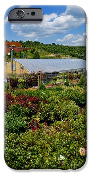 Shrubbery at a Greenhouse iPhone Case by Amy Cicconi