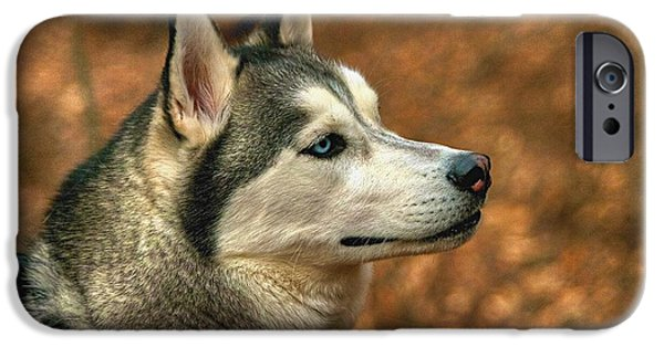Huskies iPhone Cases - Siberian Husky iPhone Case by Dennis  Baswell