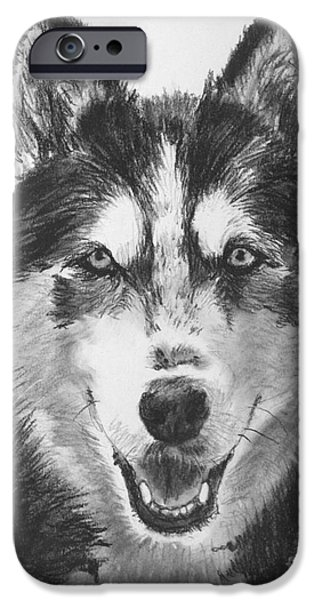 Husky Drawings iPhone Cases - Siberian Husky Drawing iPhone Case by Kate Sumners