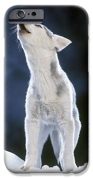 Huskies iPhone Cases - Siberian Husky Howling iPhone Case by Jean-Michel Labat