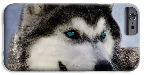 Huskies iPhone Cases - Siberian Husky iPhone Case by Linsey Williams