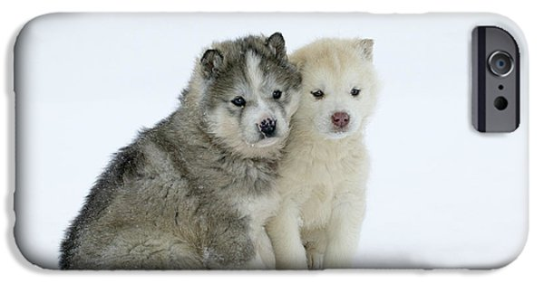 Best Sellers -  - Husky iPhone Cases - Siberian Husky Puppies iPhone Case by M. Watson