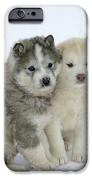 Siberian Husky Puppies iPhone Case by M. Watson