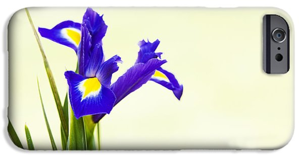 Anther iPhone Cases - Siberian Iris iPhone Case by Tim Gainey