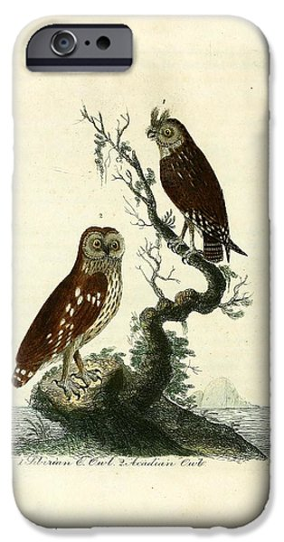 Dentist Drawings iPhone Cases - Siberian Owl and Acadian Owl iPhone Case by Unknown Artist