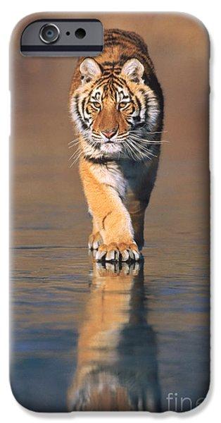 Fauna iPhone Cases - Siberian Tiger Neofelis Tigris Altaica iPhone Case by Tierbild Okapia