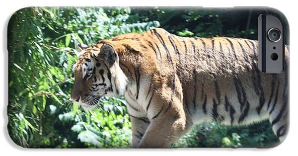 The Tiger iPhone Cases - Siberian Tiger on the Prowl iPhone Case by John Telfer