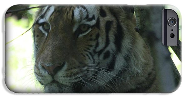 The Tiger iPhone Cases - Siberian Tiger Profile iPhone Case by John Telfer