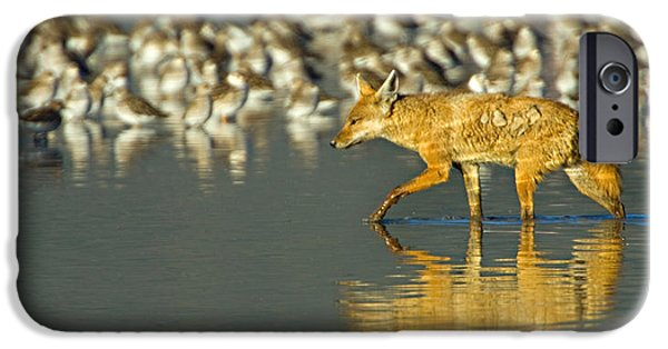 Sly iPhone Cases - Side Profile Of A Golden Jackal Wading iPhone Case by Panoramic Images