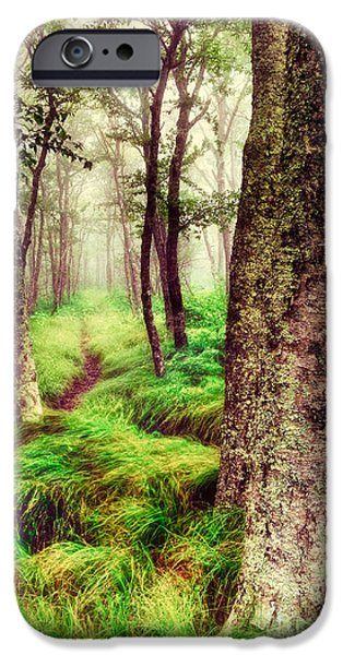 Paint Photograph iPhone Cases - Silence in the Mist II iPhone Case by Dan Carmichael