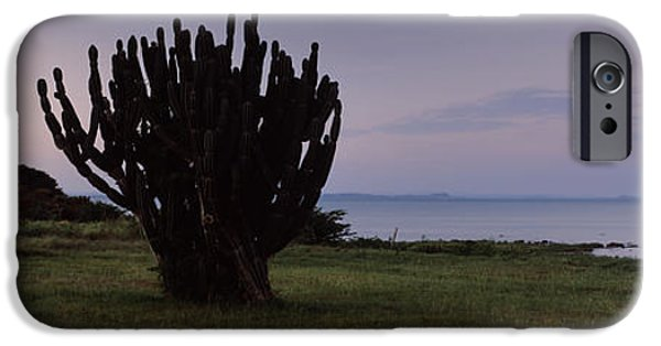 Rift iPhone Cases - Silhouette Of A Cactus At The Lakeside iPhone Case by Panoramic Images