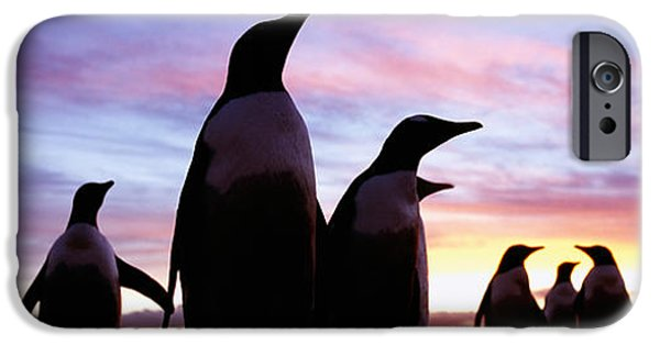 Sea Birds iPhone Cases - Silhouette Of A Group Of Gentoo iPhone Case by Panoramic Images