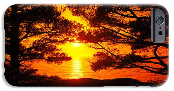 Big Sur California iPhone Cases - Silhouette Of Trees On The Coast, Big iPhone Case by Panoramic Images