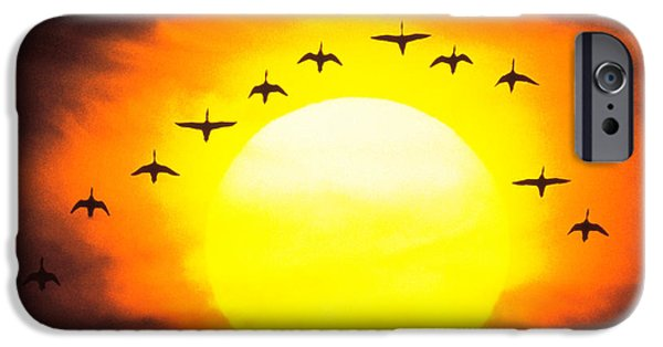 Flying Animals iPhone Cases - Silhouetted Birds In Sunset iPhone Case by Panoramic Images