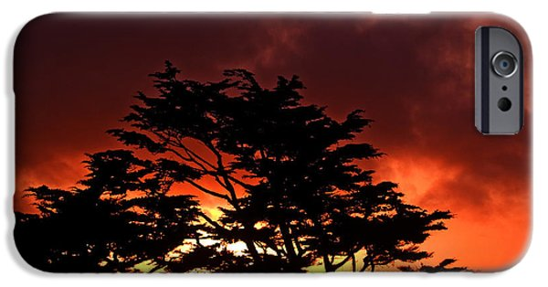 Ocean Sunset iPhone Cases - Silhouetted Cypresses iPhone Case by Bill Gallagher