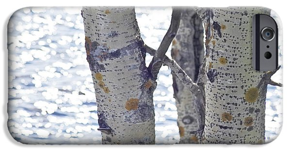 Koehrer-wagner_heiko iPhone Cases - Silver birch trees at a sunny lake iPhone Case by Heiko Koehrer-Wagner