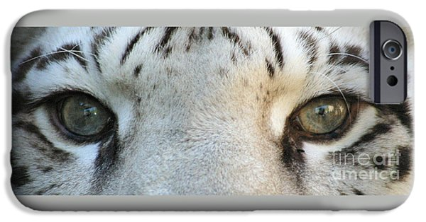 Stripes iPhone Cases - Silver - Eyes 7770 iPhone Case by Gary Gingrich Galleries