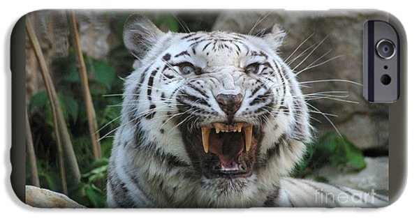Stripes iPhone Cases - Silver - Fangs 7980 iPhone Case by Gary Gingrich Galleries