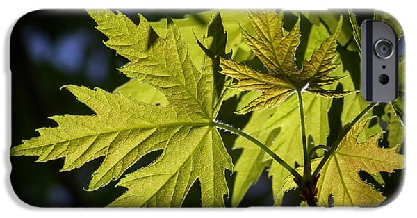 Buy iPhone Cases - Silver Maple iPhone Case by Ernie Echols