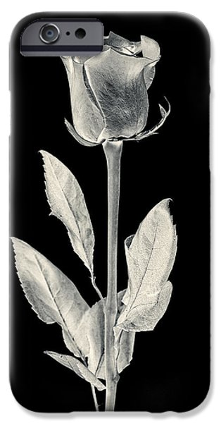 Close Up Floral iPhone Cases - Silver Rose iPhone Case by Adam Romanowicz