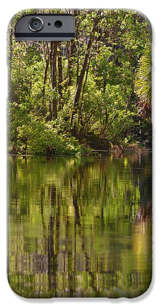 Silver Springs Nature Park Florida iPhone Case by Christine Till