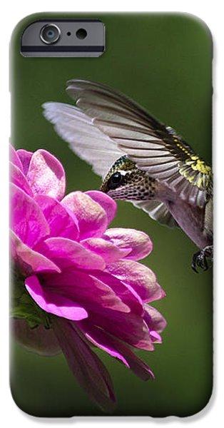 Simple Pleasure Hummingbird Delight iPhone Case by Christina Rollo