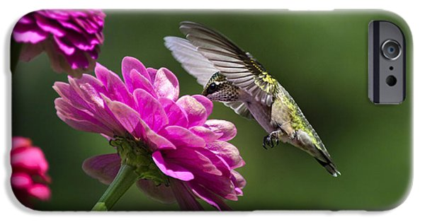 Hummingbird iPhone Cases - Simple Pleasure Hummingbird Delight iPhone Case by Christina Rollo