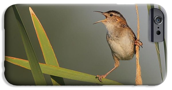 Small Pyrography iPhone Cases - Singing Marsh Wren iPhone Case by Daniel Behm