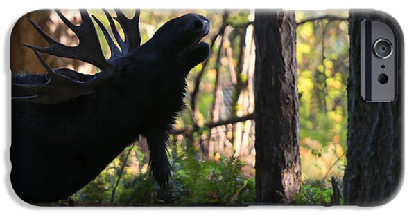 Bull Moose iPhone Cases - Singing Moose iPhone Case by Mike Dawson