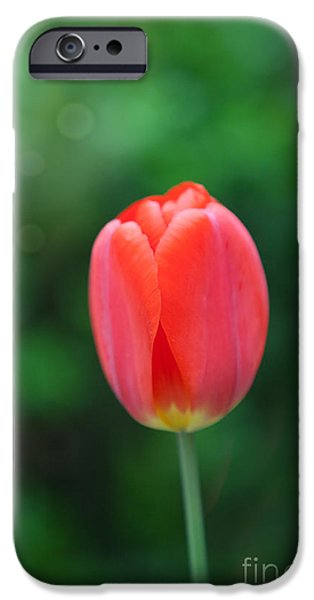 Kaypickens.com iPhone Cases - Single Beauty iPhone Case by Kay Pickens